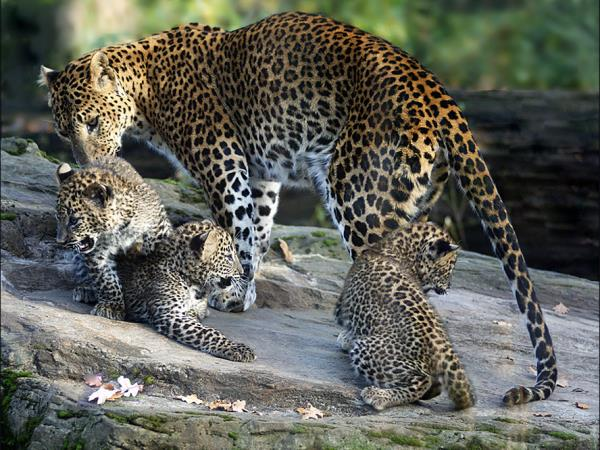 Tailor made wildlife tour of Sri Lanka
