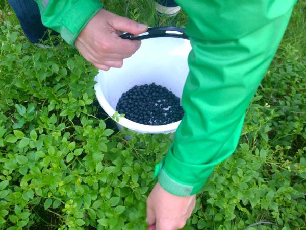 Finland wild food holiday