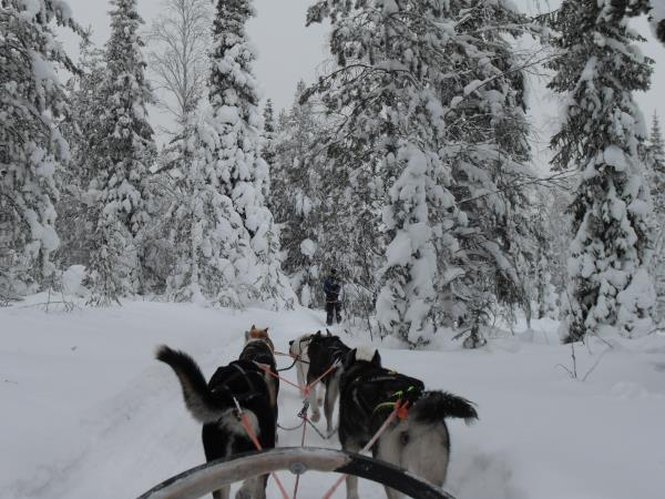 Christmas holiday in Finnish Lapland, with activities
