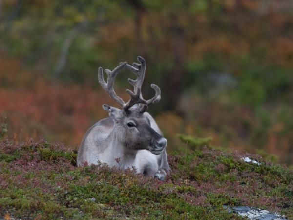 Lapland photography holiday, Autumn colours
