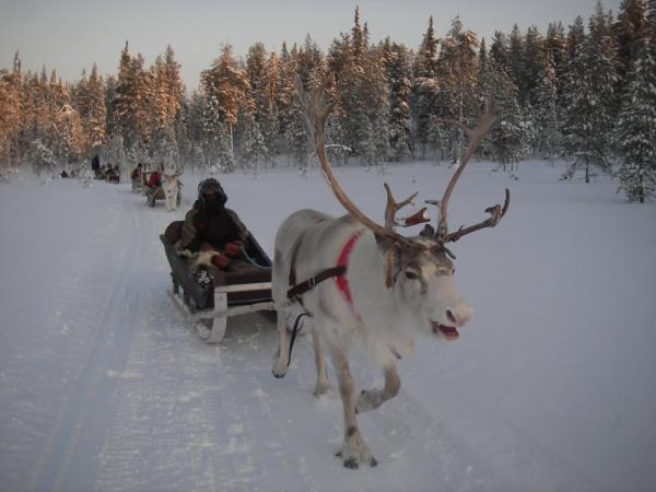 Lapland activity holiday, by train