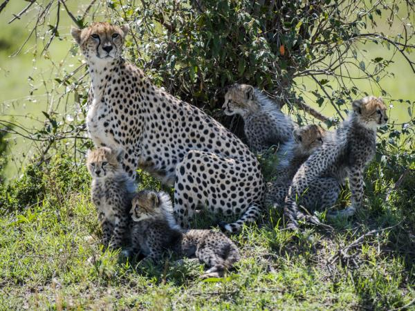 Luxury family Kenya and Tanzania safari