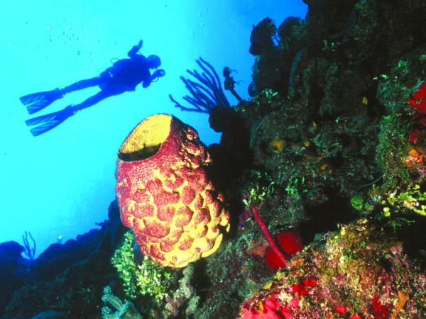 Scuba diving and tour in Cuba