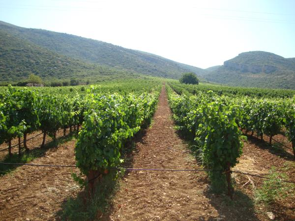 Crete holiday, wine, food and nature