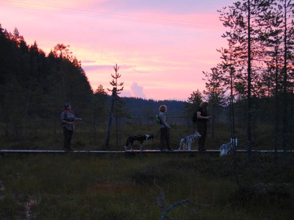 Wilderness activity holiday with huskies in Finland