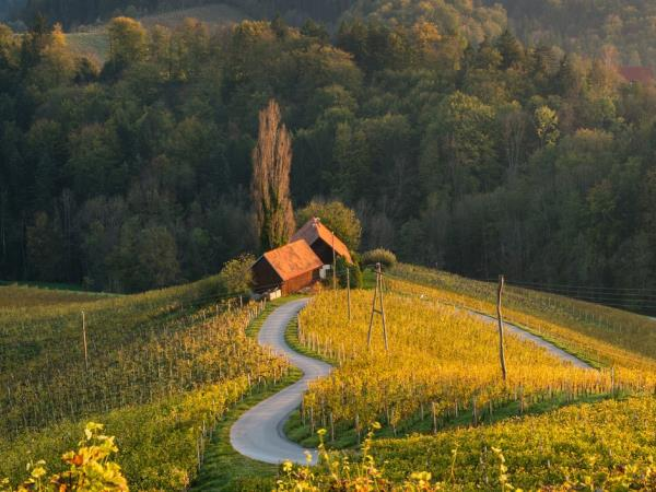 Wine tour in Croatia and Slovenia