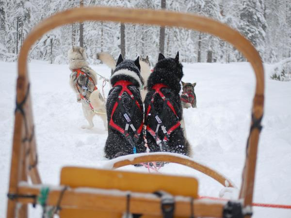 Tailor made husky safari in Wild Taiga, Finland