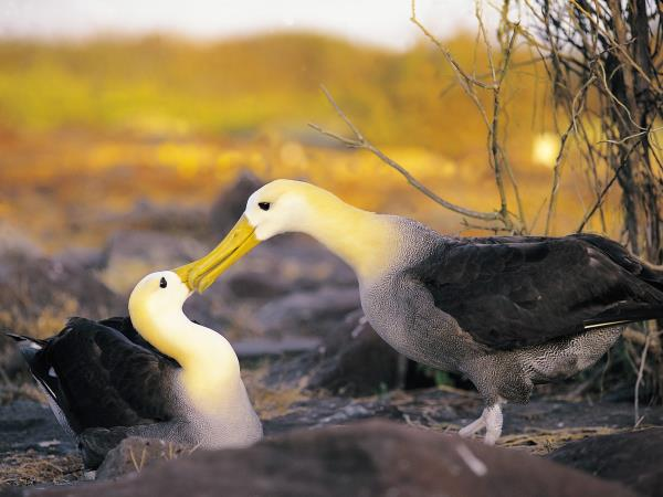 Galapagos & Ecuador tailor made holidays