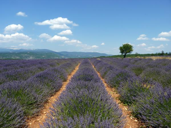Provence self drive holiday, France