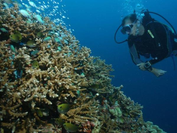 Marine conservation volunteering in the Maldives