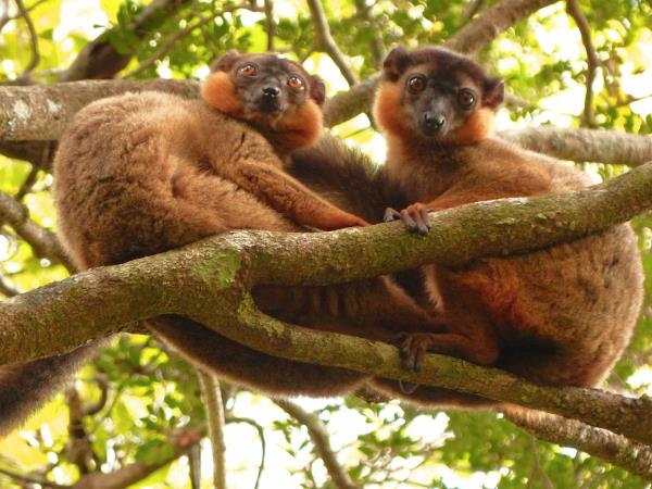 Madagascar conservation volunteering holiday