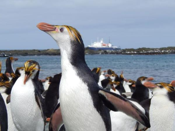 New Zealand and islands bird watching cruise