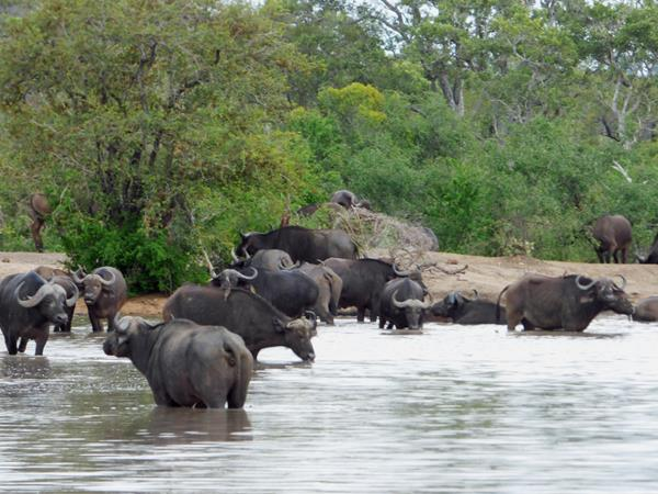 11 day South Africa safari holiday