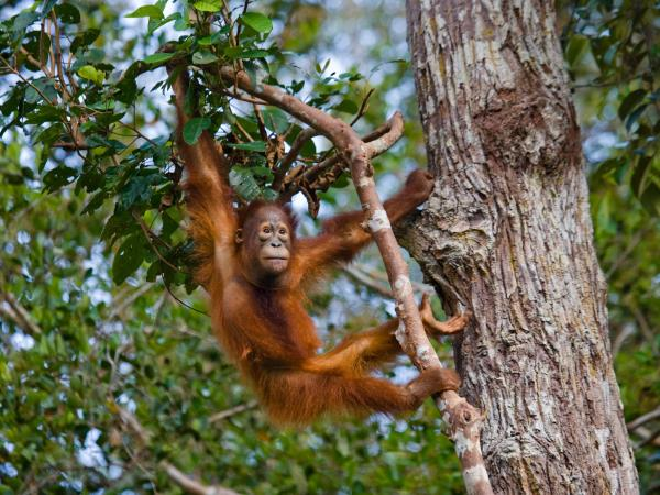 Borneo small group safari holiday
