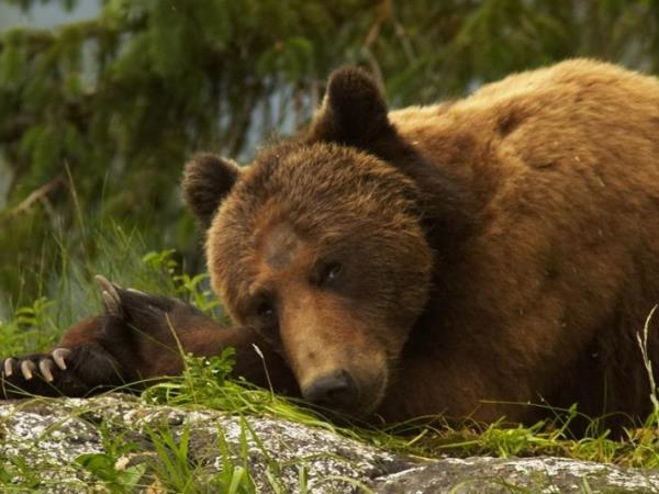 Knight Inlet grizzly bear watching in Canada