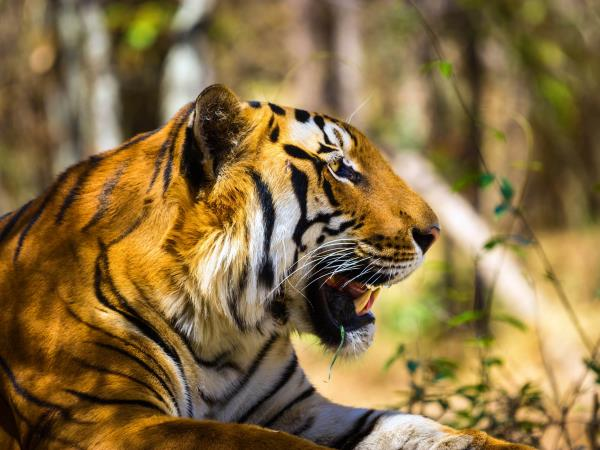 Tiger safari in India, Corbett National Park