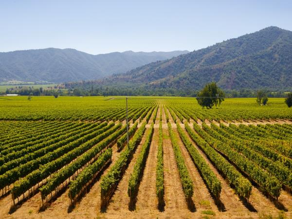 Chile tailor made holiday, Santiago, wineries and the coast