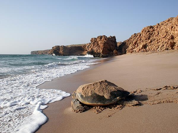 Oman holiday on a shoestring