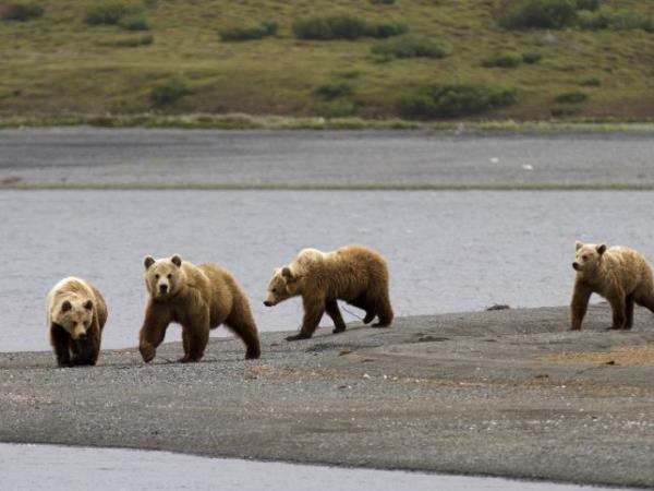 Kamchatka wildlife and bird watching cruise, Russia