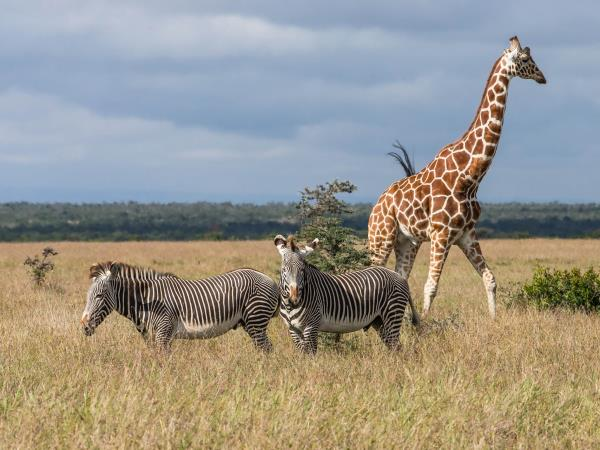 Tanzania wildlife holiday, Northern Highlights