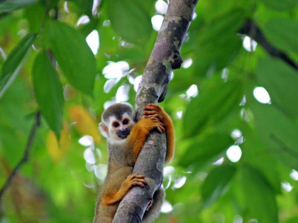 Costa Rica wildlife & beaches holiday, Pacific Coast