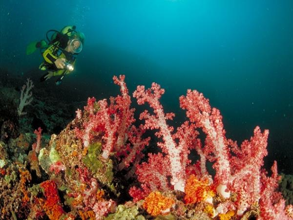 Diving holiday in Oman