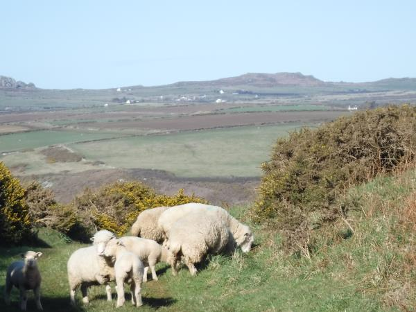 Pembrokeshire self guided walking holiday