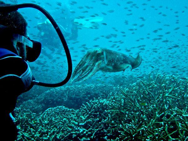 Scuba diving conservation holiday in Malaysia