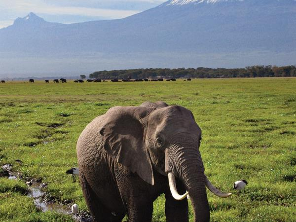 Kenya wildlife and safari holiday