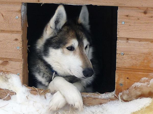 Lapland husky safari and activity holiday, Finland