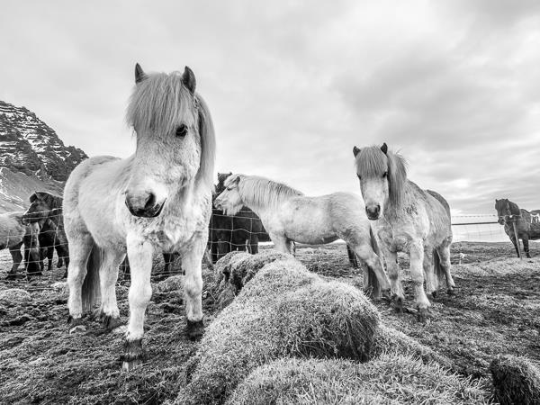 South East Iceland photography tour, glacier landscape, coast & horses