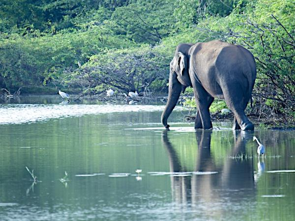 Sri Lanka small group holiday