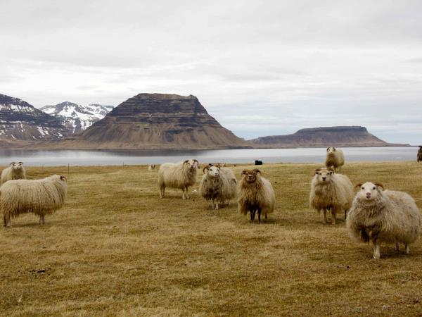 Photography and birding holiday in West Iceland