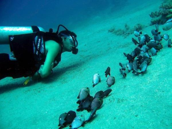 Red Sea diving & yacht charter holiday, Jordan