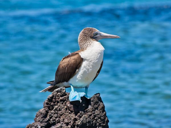 Peru and Galapagos holiday