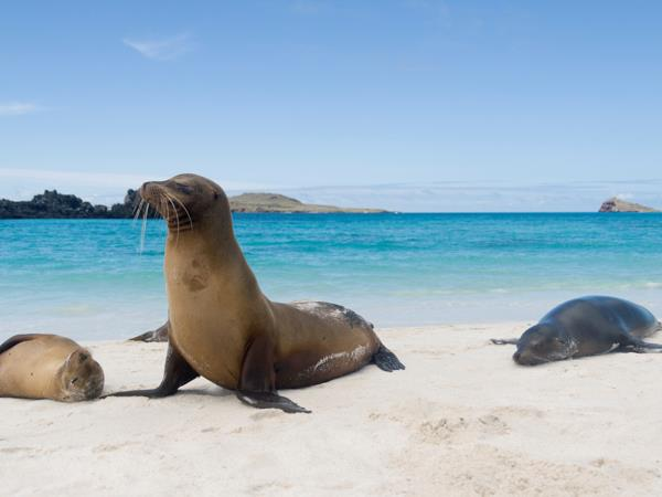 Galapagos Islands cruise, on a shoestring