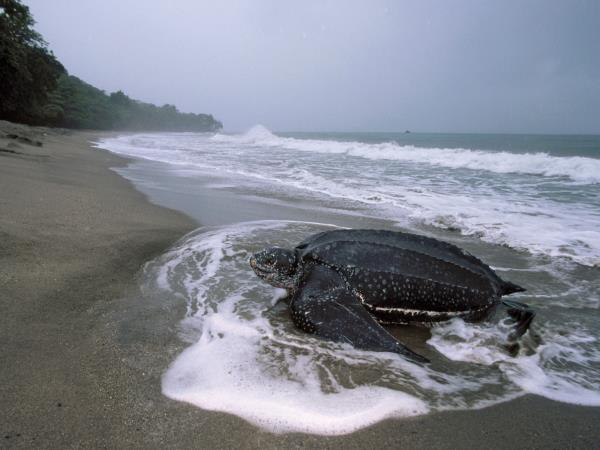 Costa Rica sea turtles conservation holiday