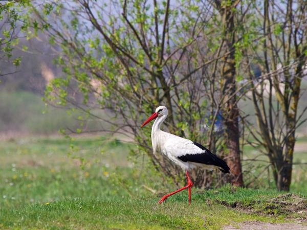 Poland holiday, wildlife in Spring