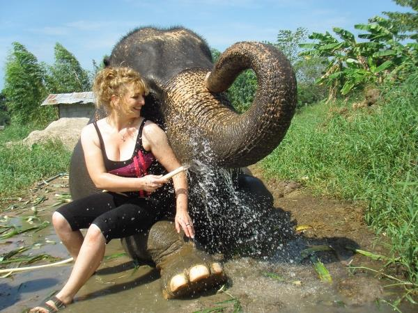 Elephant conservation in Thailand