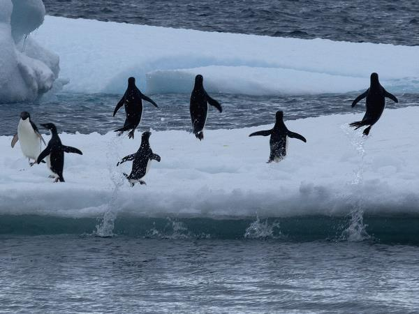 Antarctic Peninsula crossing the Polar Circle cruise