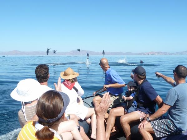 Baja & the Sea of Cortez adventure cruises, Mexico