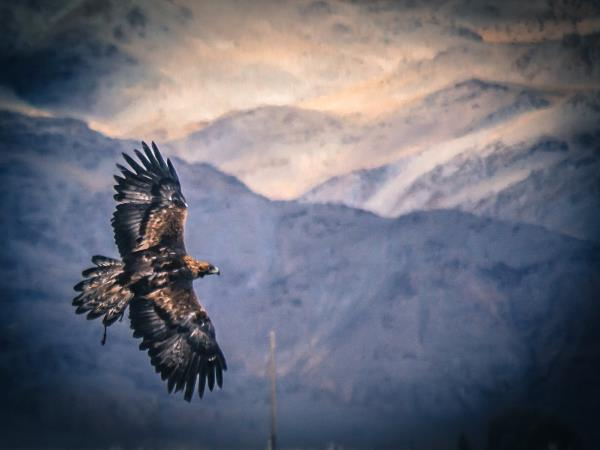 Mongolia tour, hunting with Eagles