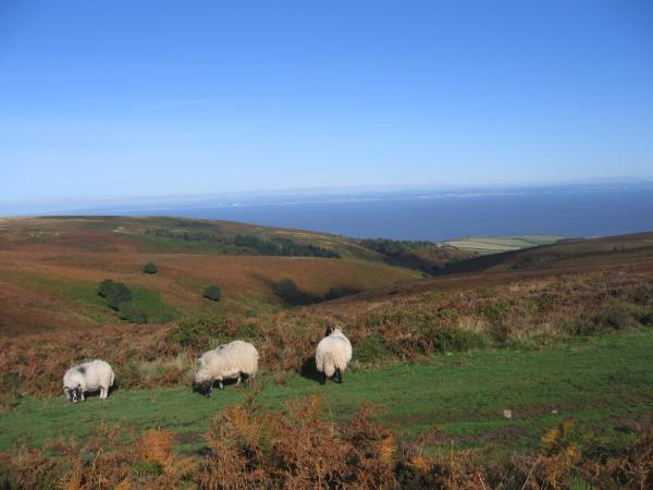 Quantock hills walking holiday, England