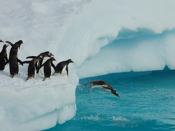 Antarctica holiday, Shackleton's Antarctica in 18 days