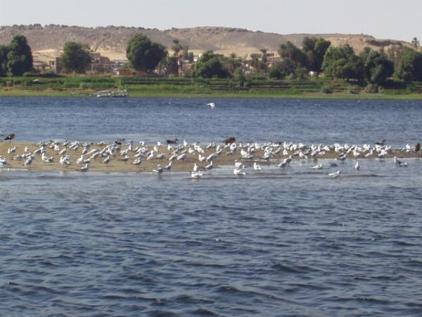 Nile cruise & cultural holiday, Egypt