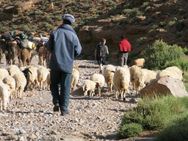 Trekking in Morocco with a Berber family