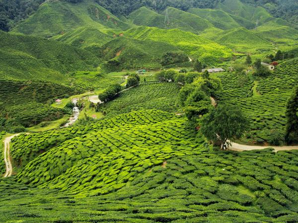 Darjeeling & Sikkim tailor made holiday, India