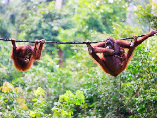 Best of Borneo holiday, tailor made