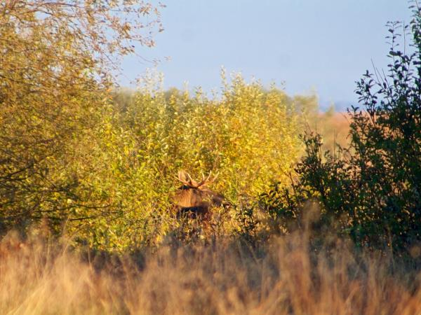 Poland wildlife holiday, Autumn birds & mammals