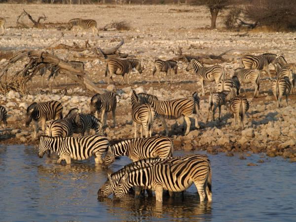 The Grand Southern Africa safari